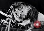 Image of circus performance Berlin Germany, 1944, second 35 stock footage video 65675020575