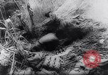 Image of New Guinea Campaign Papua New Guinea, 1944, second 47 stock footage video 65675020581