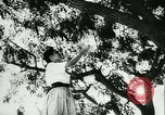 Image of Spanish girls Spain, 1944, second 7 stock footage video 65675020616
