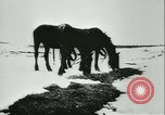 Image of Col Lucien Lippert Soviet Union, 1944, second 10 stock footage video 65675020641