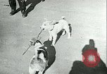 Image of German and British fighter planes in aerial combat France, 1941, second 54 stock footage video 65675020692