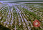 Image of Farm machinery United States USA, 1958, second 9 stock footage video 65675020865