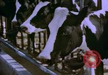 Image of Milk production United States USA, 1958, second 5 stock footage video 65675020868