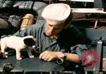 Image of Puppy in life preserver United Kingdom, 1944, second 4 stock footage video 65675020899