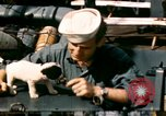 Image of Puppy in life preserver United Kingdom, 1944, second 5 stock footage video 65675020899