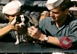 Image of Puppy in life preserver United Kingdom, 1944, second 10 stock footage video 65675020899