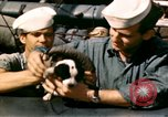 Image of Puppy in life preserver United Kingdom, 1944, second 13 stock footage video 65675020899