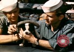 Image of Puppy in life preserver United Kingdom, 1944, second 14 stock footage video 65675020899
