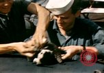 Image of Puppy in life preserver United Kingdom, 1944, second 16 stock footage video 65675020899