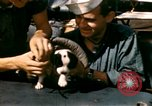 Image of Puppy in life preserver United Kingdom, 1944, second 17 stock footage video 65675020899