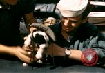 Image of Puppy in life preserver United Kingdom, 1944, second 18 stock footage video 65675020899
