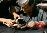 Image of Puppy in life preserver United Kingdom, 1944, second 19 stock footage video 65675020899