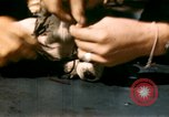 Image of Puppy in life preserver United Kingdom, 1944, second 21 stock footage video 65675020899