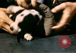 Image of Puppy in life preserver United Kingdom, 1944, second 23 stock footage video 65675020899