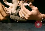 Image of Puppy in life preserver United Kingdom, 1944, second 26 stock footage video 65675020899
