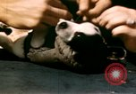 Image of Puppy in life preserver United Kingdom, 1944, second 30 stock footage video 65675020899