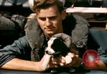 Image of Puppy in life preserver United Kingdom, 1944, second 32 stock footage video 65675020899