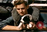 Image of Puppy in life preserver United Kingdom, 1944, second 33 stock footage video 65675020899
