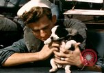 Image of Puppy in life preserver United Kingdom, 1944, second 34 stock footage video 65675020899