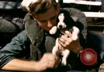 Image of Puppy in life preserver United Kingdom, 1944, second 35 stock footage video 65675020899