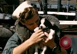Image of Puppy in life preserver United Kingdom, 1944, second 36 stock footage video 65675020899