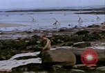 Image of Allied troops advancing through ruins and beach obstacles Valognes France, 1944, second 43 stock footage video 65675020907