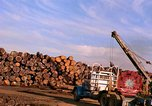 Image of log piles California United States USA, 1967, second 26 stock footage video 65675020971