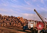 Image of log piles California United States USA, 1967, second 27 stock footage video 65675020971