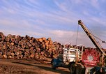 Image of log piles California United States USA, 1967, second 28 stock footage video 65675020971