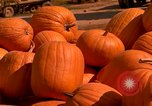 Image of pile of newly picked pumpkins California United States USA, 1967, second 5 stock footage video 65675020973