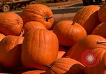 Image of pile of newly picked pumpkins California United States USA, 1967, second 12 stock footage video 65675020973