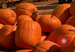 Image of pile of newly picked pumpkins California United States USA, 1967, second 13 stock footage video 65675020973