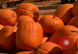 Image of pile of newly picked pumpkins California United States USA, 1967, second 14 stock footage video 65675020973