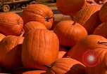 Image of pile of newly picked pumpkins California United States USA, 1967, second 15 stock footage video 65675020973