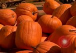 Image of pile of newly picked pumpkins California United States USA, 1967, second 16 stock footage video 65675020973