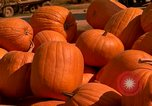 Image of pile of newly picked pumpkins California United States USA, 1967, second 18 stock footage video 65675020973