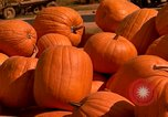 Image of pile of newly picked pumpkins California United States USA, 1967, second 19 stock footage video 65675020973