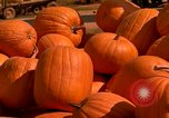 Image of pile of newly picked pumpkins California United States USA, 1967, second 20 stock footage video 65675020973