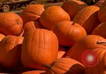 Image of pile of newly picked pumpkins California United States USA, 1967, second 22 stock footage video 65675020973