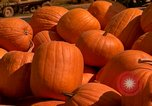 Image of pile of newly picked pumpkins California United States USA, 1967, second 23 stock footage video 65675020973