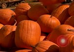 Image of pile of newly picked pumpkins California United States USA, 1967, second 24 stock footage video 65675020973