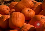 Image of pile of newly picked pumpkins California United States USA, 1967, second 25 stock footage video 65675020973