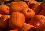 Image of pile of newly picked pumpkins California United States USA, 1967, second 26 stock footage video 65675020973