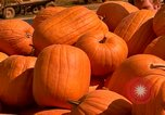 Image of pile of newly picked pumpkins California United States USA, 1967, second 27 stock footage video 65675020973