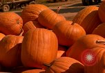 Image of pile of newly picked pumpkins California United States USA, 1967, second 30 stock footage video 65675020973