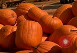 Image of pile of newly picked pumpkins California United States USA, 1967, second 32 stock footage video 65675020973