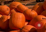 Image of pile of newly picked pumpkins California United States USA, 1967, second 39 stock footage video 65675020973