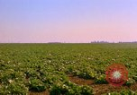 Image of green cabbage California United States USA, 1967, second 19 stock footage video 65675020974