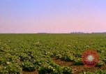 Image of green cabbage California United States USA, 1967, second 20 stock footage video 65675020974