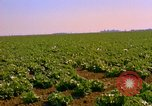 Image of green cabbage California United States USA, 1967, second 23 stock footage video 65675020974